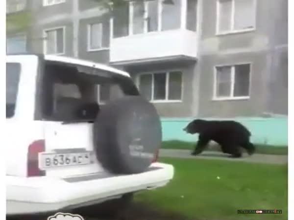 Setkání s medvědem #24