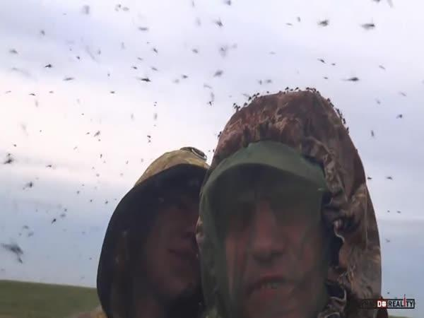 Ráj ruských komárů