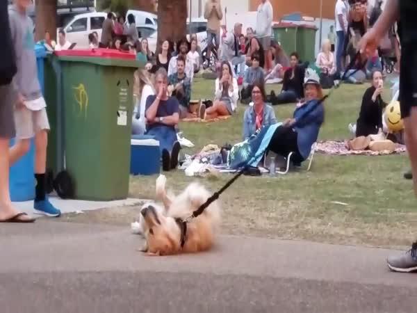 Zoufalý pes nechce na procházku