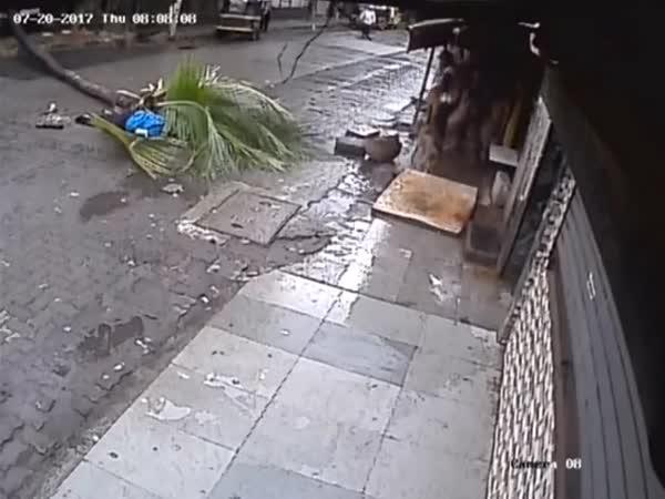 Dostala po hlavě kokosovou palmou