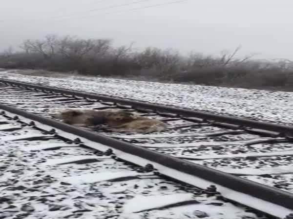 Nerozlučná psí dvojka vs. vlak