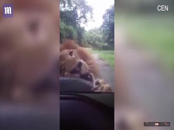 Lev vs. pneumatika