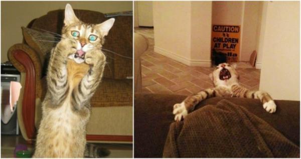GALERIE - Kočky, mistři dramatu