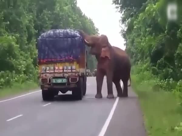 Slon zlodějem brambor