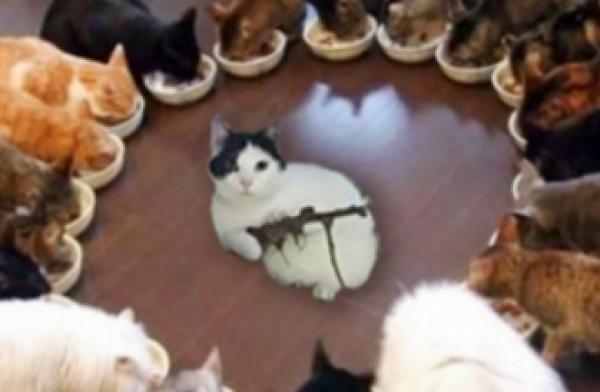 GALERIE - Kočka s kulometem 2