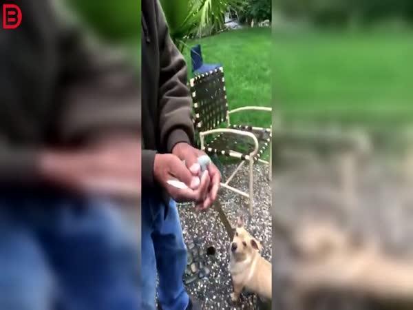 Pták vs. pes – Tak to nevyšlo