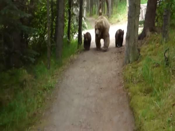 Když potkáš rodinu medvědů