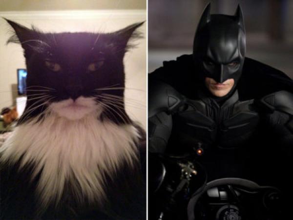 GALERIE - Kočky vypadající jako celebrity