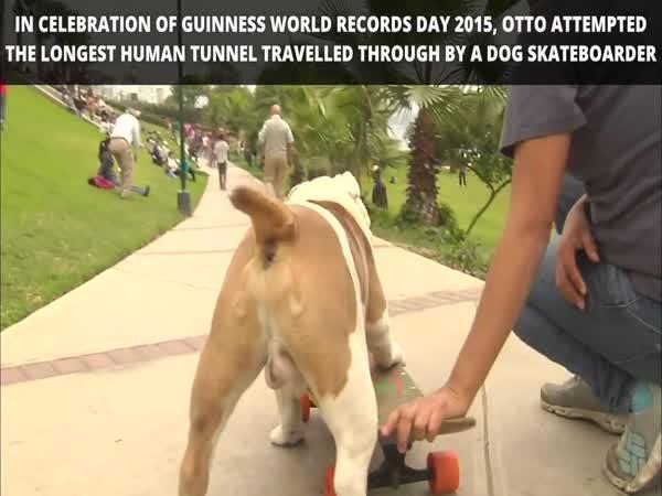 Pes na skateboardu hvězdou internetu