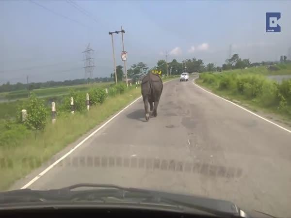 Nosorožec využil zdejší komunikaci