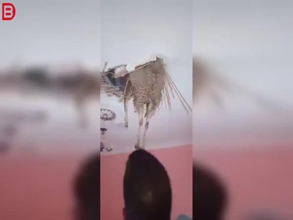 Nečekaná návšteva ve stropě