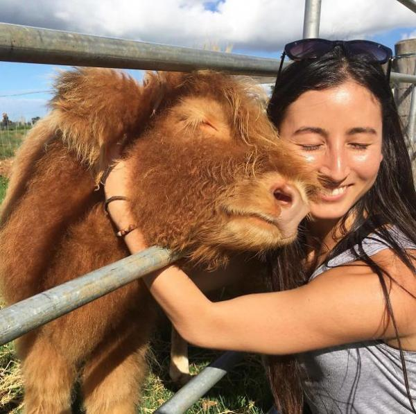 GALERIE - Kráva jako domácí mazlíček