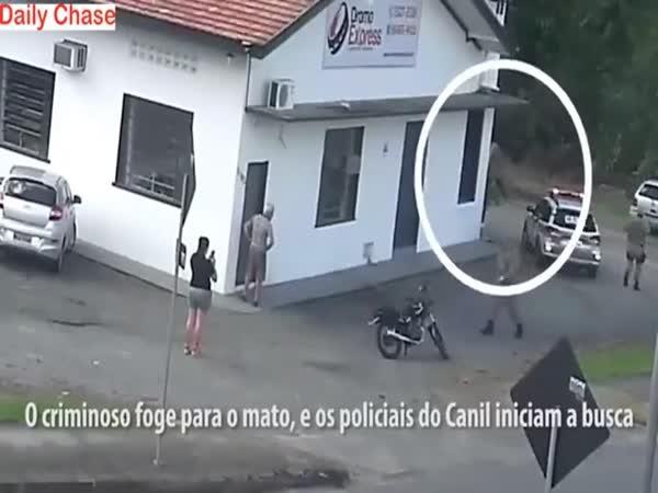 Skvělá práce policejního psa