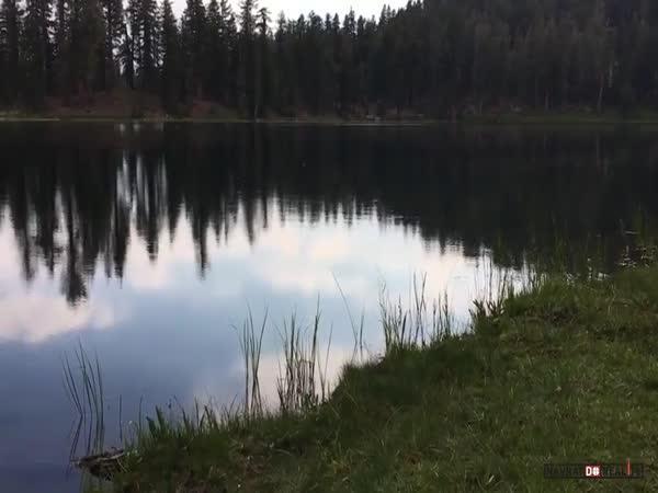 Jak si pohrát s hmyzem v jezeře?
