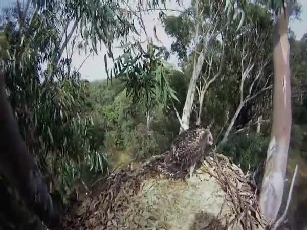 Záchrana poraněného orla