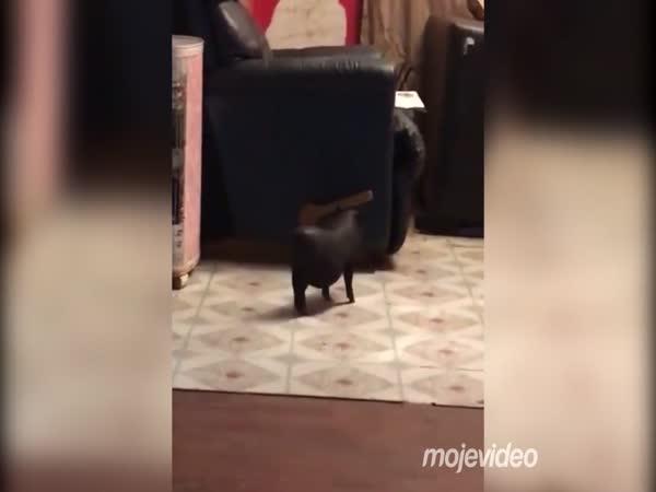 Zvířecí spolubydlící