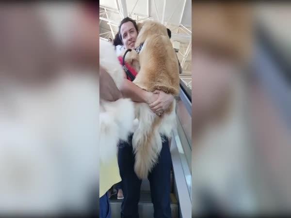 Když se velký pes bojí eskalátoru