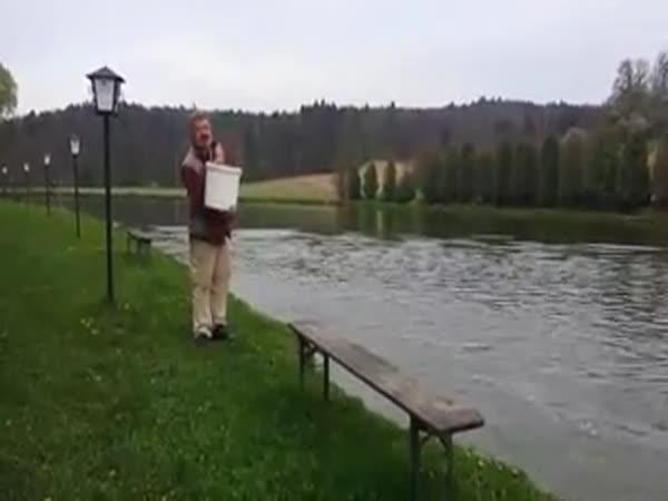 Krmení hladových ryb