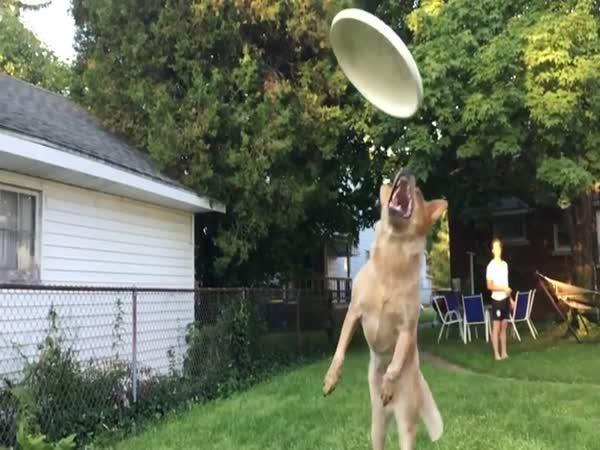 Přines frisbee!
