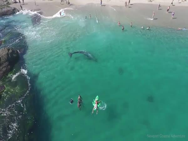 Netušili, co kolem nich plave!