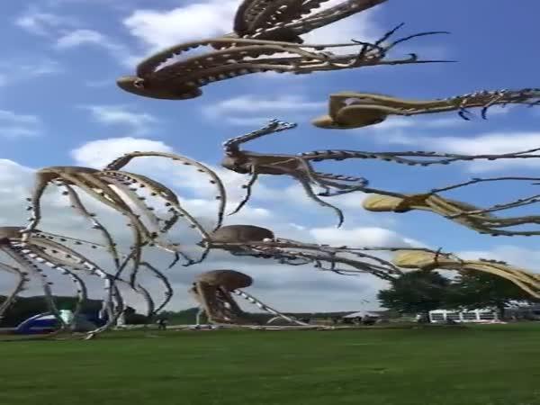 Chobotnicoví draci