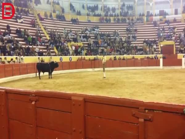 Člověk vs. býk v Portugalsku #54