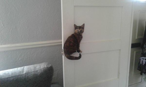 GALERIE - Kočky vždy zlepší náladu!
