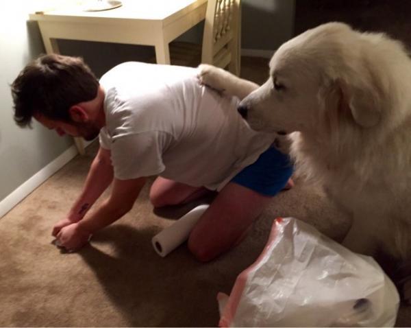GALERIE – Zvířata nechtějí opustit pána