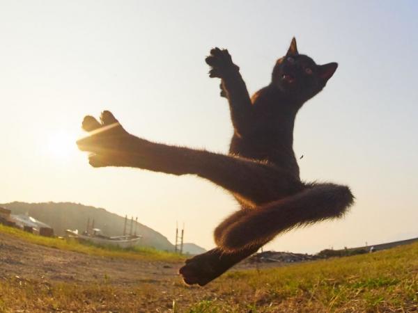 GALERIE - Ninja kočky 1