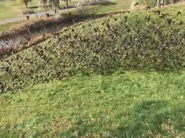 Invaze ptáků na zahradě