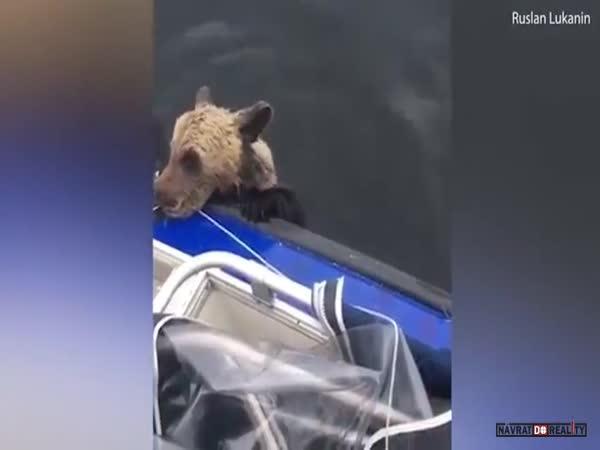 Záchrana medvíděte v Rusku