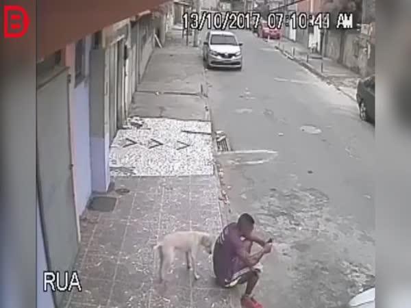 I zvíře umí dělat pranky
