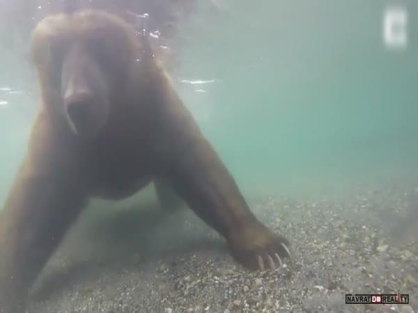Medvěd loví pod vodou