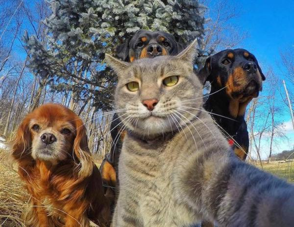 GALERIE - Nejlepší selfie zvířat 1