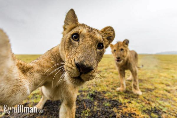 GALERIE - Nejlepší selfie zvířat 2