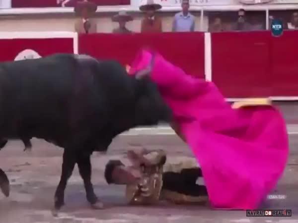 Člověk vs. býk #56
