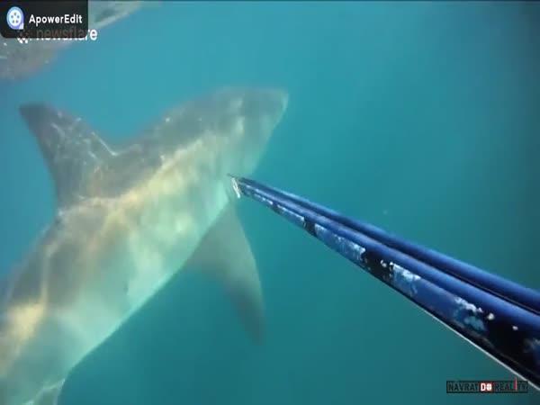 Setkání se žralokem #19