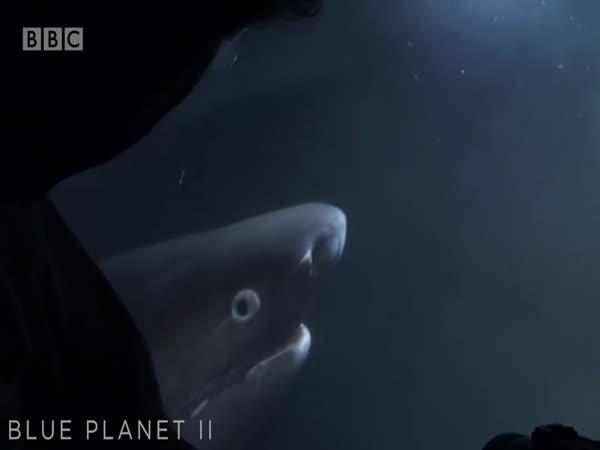 Setkání se žralokem #20