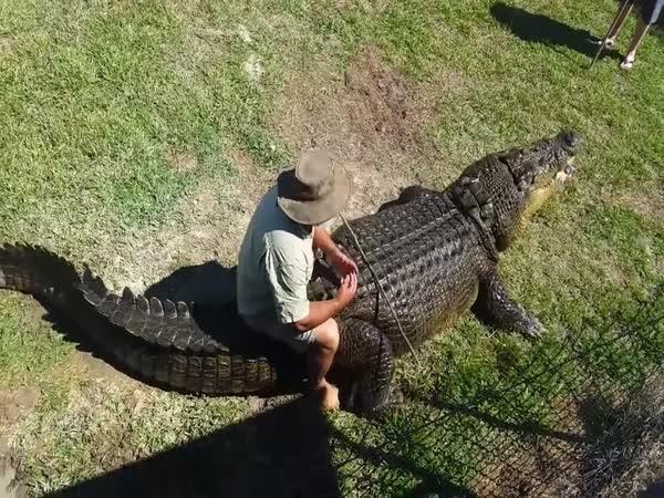 Krmení krokodýla