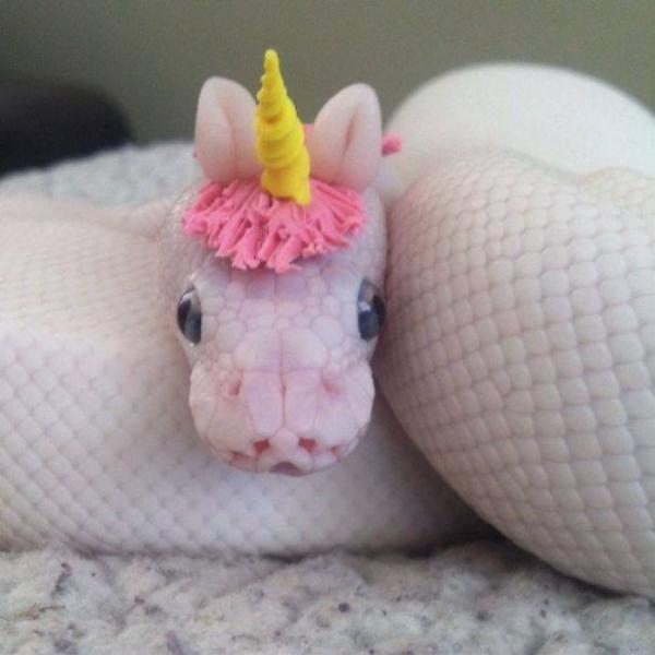 GALERIE - Nejroztomilejší hadi na světě 1