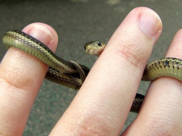 GALERIE - Nejroztomilejší hadi 3