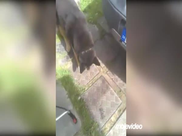 Hra stínů se psem