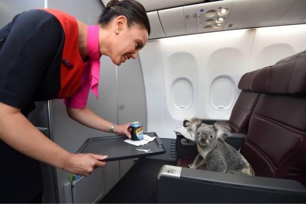 GALERIE - Mazlíčci v letadle #1