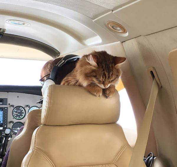 GALERIE - Mazlíčci v letadle #2