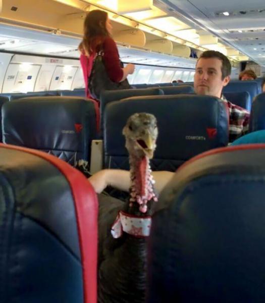 GALERIE - Mazlíčci v letadle #4