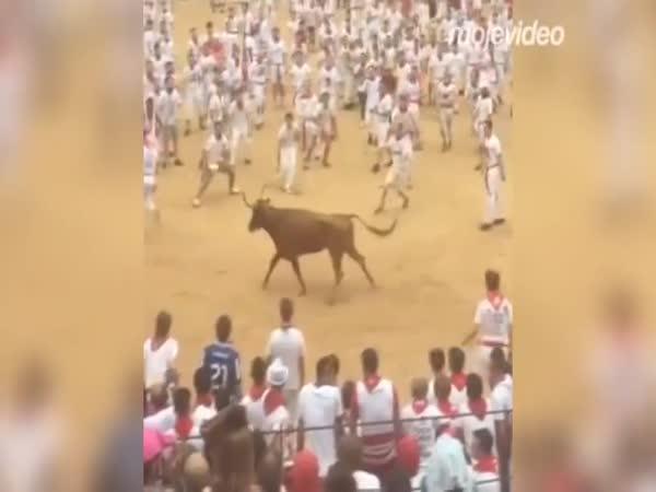 Běh s býky do arény
