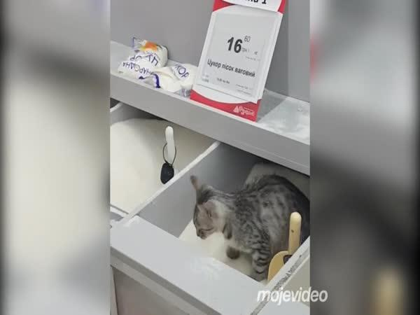 Mouka s příchutí kočky