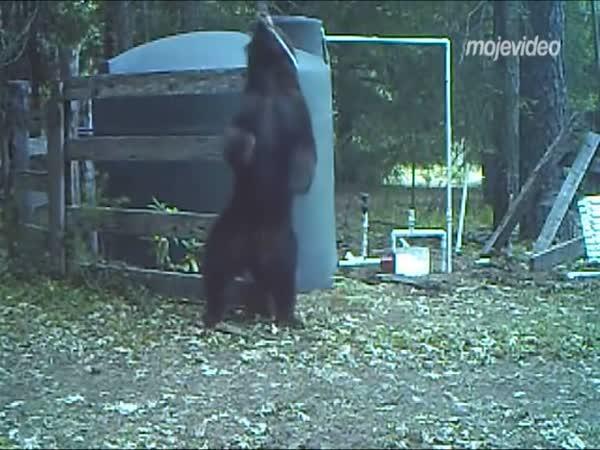 Medvěd schytal nepříjemnou ránu