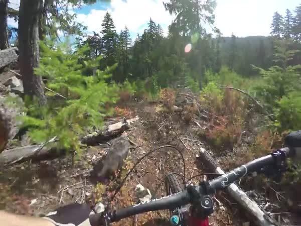 Downhill – Steve Storey