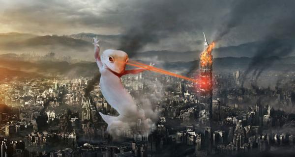 GALERIE - Tančící gekon a Photoshop